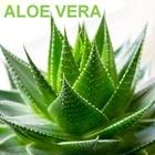 Kołdra aloesowa 200x220 Aloe Vera (4)