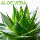 Poduszka ortopedyczna aloesowa 40x60 Aloe Vera (7)