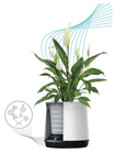 Biofiltr Airy M - doniczka oczyszczająca powietrze biały/szary (2)